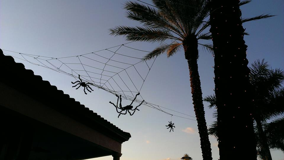 Spiders at CJ's