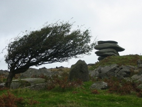 """Windswept tree and the Cheesewring - geograph.org.uk - 92456"" by James Miller. Licensed under CC BY-SA 2.0 via Wikimedia Commons - http://commons.wikimedia.org/wiki/File:Windswept_tree_and_the_Cheesewring_-_geograph.org.uk_-_92456.jpg#/media/File:Windswept_tree_and_the_Cheesewring_-_geograph.org.uk_-_92456.jpg"