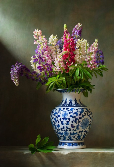 Lupines in vase